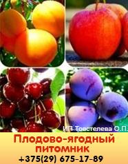 Питомник плодово-ягодный в Гомеле